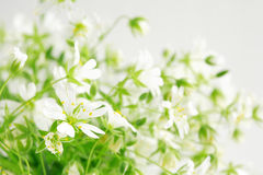 Beauté des fleurs sauvages Image stock