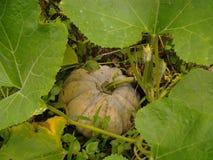 Beauté des légumes photographie stock