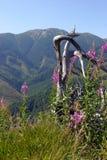 Beauté des montagnes Photographie stock libre de droits