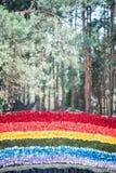 Beauté des roses Photographie stock libre de droits