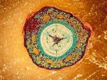 Beauté des sciences biologiques sous la microscopie Images stock