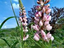 Beauté du Vermont Photos stock