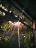 Beauté emprisonnée Images stock