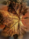 Beauté en automne Images stock