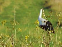 Beauté en nature Photographie stock libre de droits