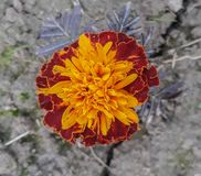 Beauté florale photographie stock