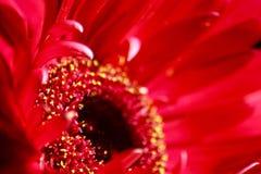 Beauté florale dans le rose Photos libres de droits