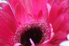 Beauté florale dans le rose Image stock