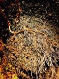 Beauté foncée sur un bois mort photo stock