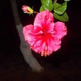 Beauté la nuit Images stock