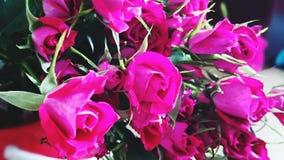 Beauté normale Image stock