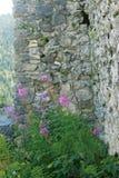 Beauté parmi des ruines Photographie stock libre de droits