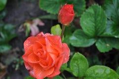 Beauté peu commune dans le jardin images stock