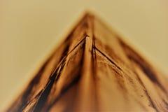 Beauté symétrique dans la vie Photographie stock libre de droits