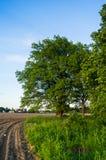 Beauté tranquille d'une soirée d'été dans la campagne désolée Un vieux chêne embranché avec la cavité profonde dans son tronc et  image libre de droits