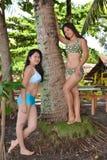 Beauté tropicale photos libres de droits