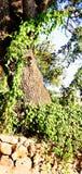 Beaut? verte de l'arbre A de nature image stock