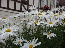 Beautés blanches Photographie stock libre de droits