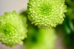 Beautés florales en vert Photo libre de droits