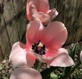 Beautés roses au soleil Image libre de droits