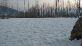 Beauté de la Kashmir Image stock
