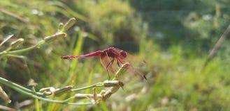 Beaut? de nature photo stock