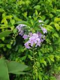 Beaut? naturelle des fleurs photo libre de droits