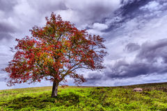 Beauteful nature Royalty Free Stock Photography