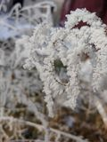 Beautiful winter textures royalty free stock images