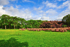 The beautful garden_scenery Royalty Free Stock Photo