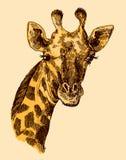 Beautful portreta og ręka rysująca ilustracyjna żyrafa ilustracji