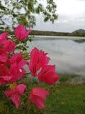 Beauti natura obraz royalty free