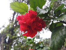 Beauti of Nature. Beautiful flowers in Nature stock photo