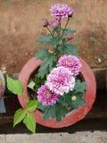 Beauti of Nature. Beautiful flowers in Nature royalty free stock photo