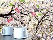 Beauti sakura with nice backgroud Royalty Free Stock Photos