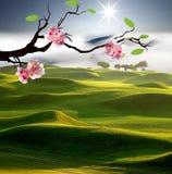 Beauti sakura with nice backgroud Royalty Free Stock Images