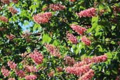Beautifel blommor Arkivfoto