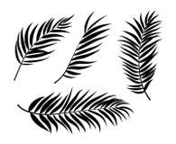 Beautifil棕榈树叶子剪影背景传染媒介例证 向量例证