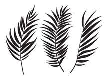 Beautifil棕榈树叶子剪影背景传染媒介例证 库存例证