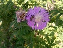Beautifil blomma Arkivbild