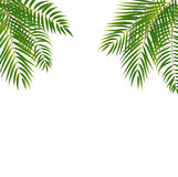 Beautifil Palm Tree Leaf  Silhouette Background Vector Illustrat Royalty Free Stock Image
