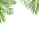 Beautifil Palm Tree Leaf  Silhouette Background Vector Illustrat Stock Images