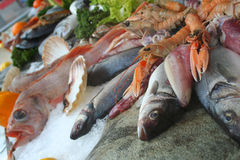 Beautifil seafood Stock Photography