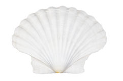 Beautifiul ocean shell isolated on white Royalty Free Stock Photo