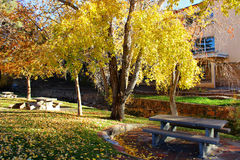 Beautifl Yellow, and Orange. Beautiful yellow and orange leaves spot the trees, and the ground, along the river Stock Photography