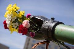 Beautifrul blüht im Fass des Behälters 9. Mai Sieg-Tag in Russland Frieden in der Welt Anschlagtafel getrennt auf Weiß Lizenzfreie Stockfotos
