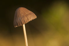 Beautifrul czapeczka Zdjęcia Stock