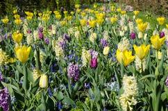 Beautifu amarillea el fondo de la primavera, textura de un gran número Foto de archivo libre de regalías