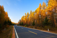 The beautifu autumn forest Stock Image