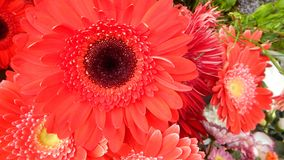 Beautifu colorful flowers solt at a street Royalty Free Stock Photography